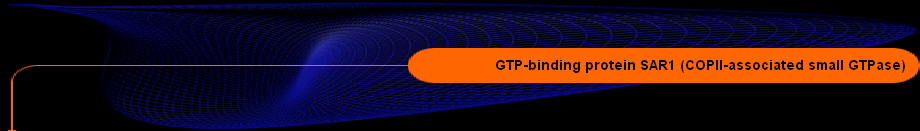 GTP-binding protein SAR1 (COPII-associated small GTPase)